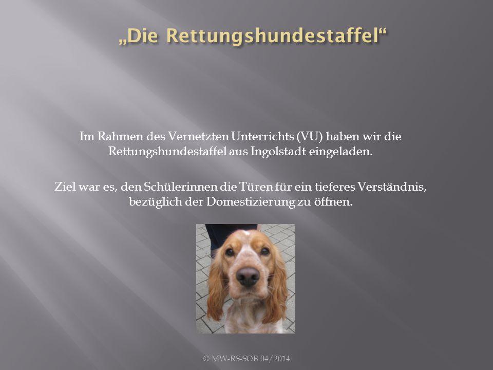 Nach einer theoretischen Einführung durch die Hundeführerinnen der Hundestaffel des Arbeiter-Samariter-Bundes… © MW-RS-SOB 04/2014