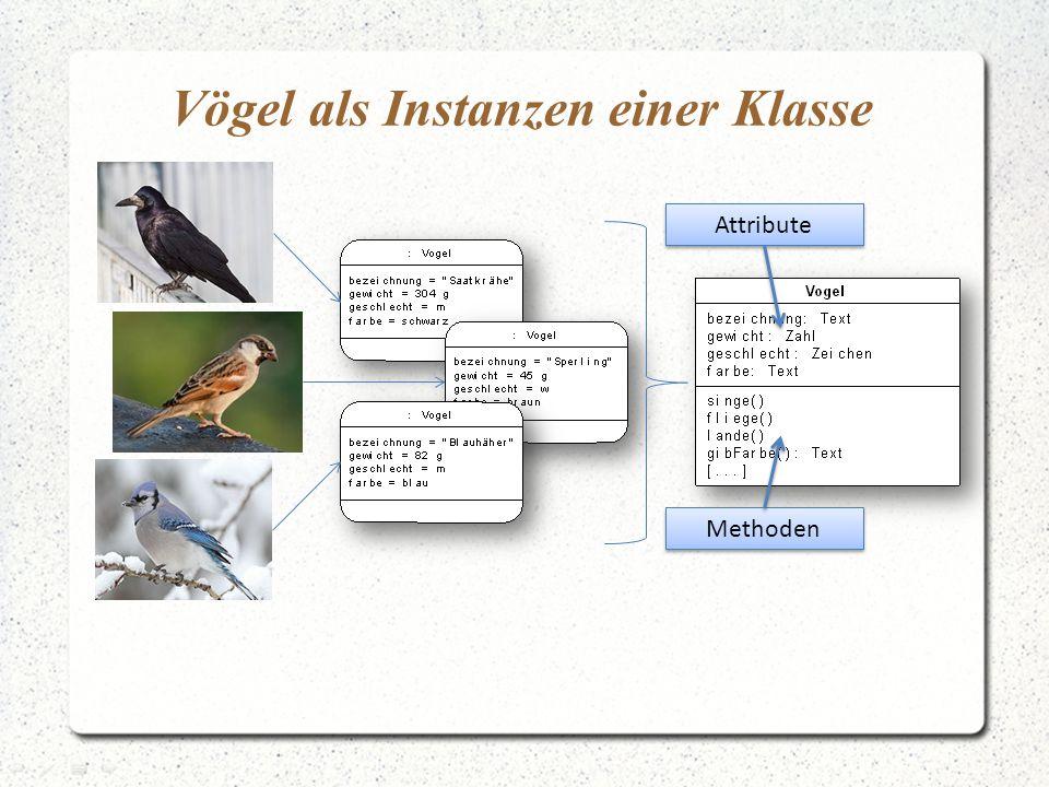 Vögel als Instanzen einer Klasse Attribute Methoden