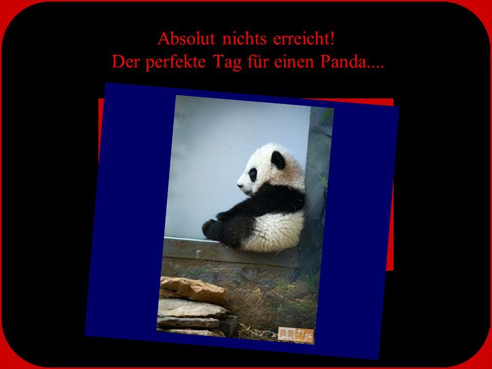 Pandas beim Morgengebet....