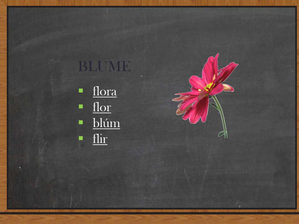 BLUME  flora flora  flor flor  blúm blúm  flir flir