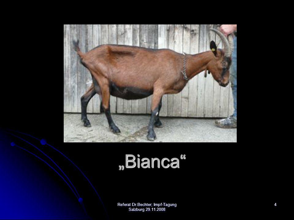 "4 ""Bianca"