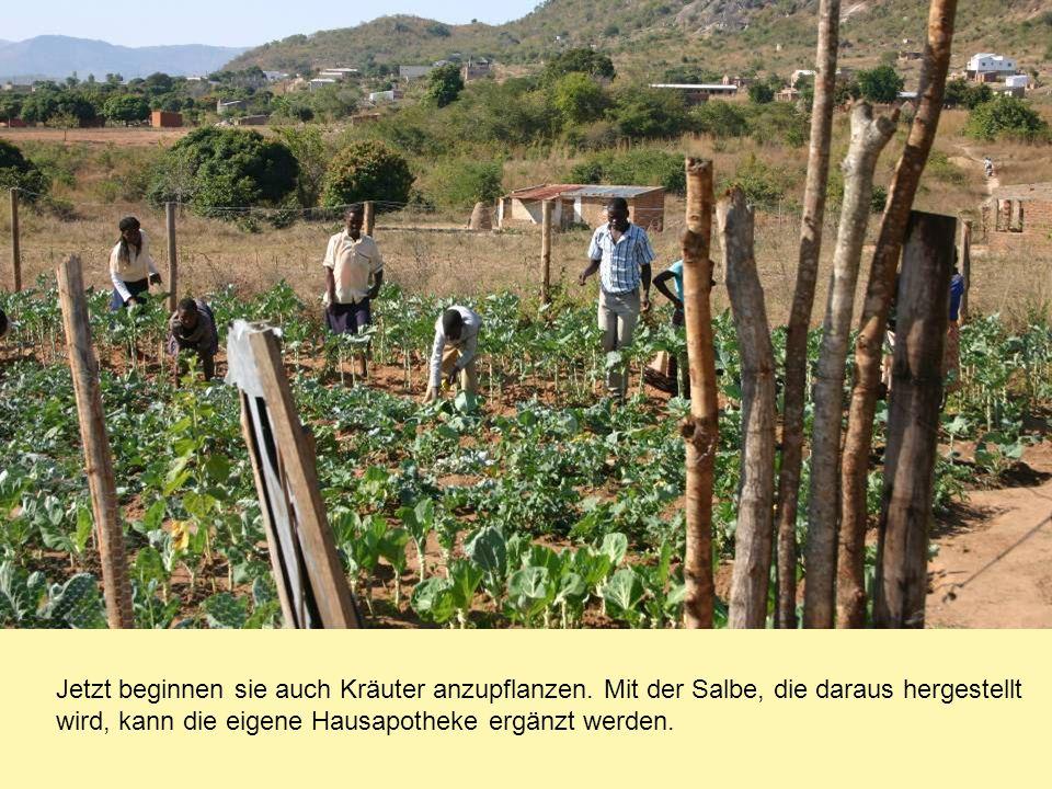 Jetzt beginnen sie auch Kräuter anzupflanzen. Mit der Salbe, die daraus hergestellt wird, kann die eigene Hausapotheke ergänzt werden.
