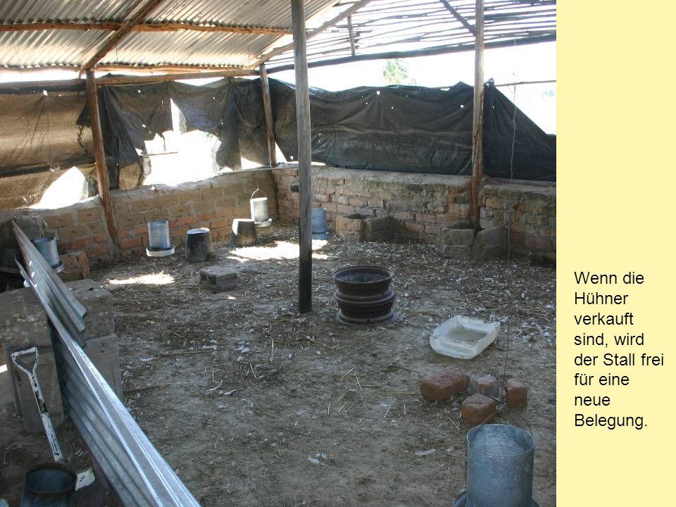 Wenn die Hühner verkauft sind, wird der Stall frei für eine neue Belegung.