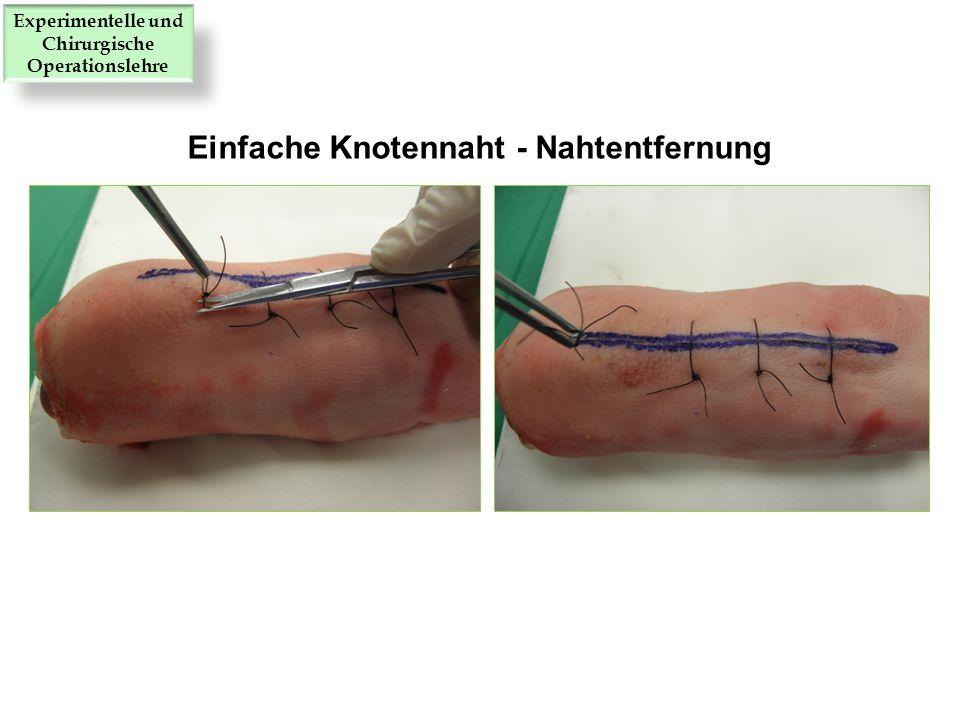 Einfache Knotennaht - Nahtentfernung Experimentelle und Chirurgische Operationslehre