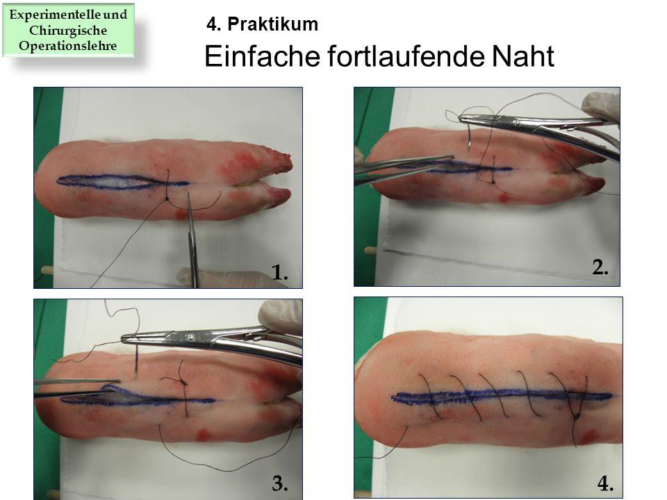 1. 2. 3.4. Einfache fortlaufende Naht 4. Praktikum Experimentelle und Chirurgische Operationslehre
