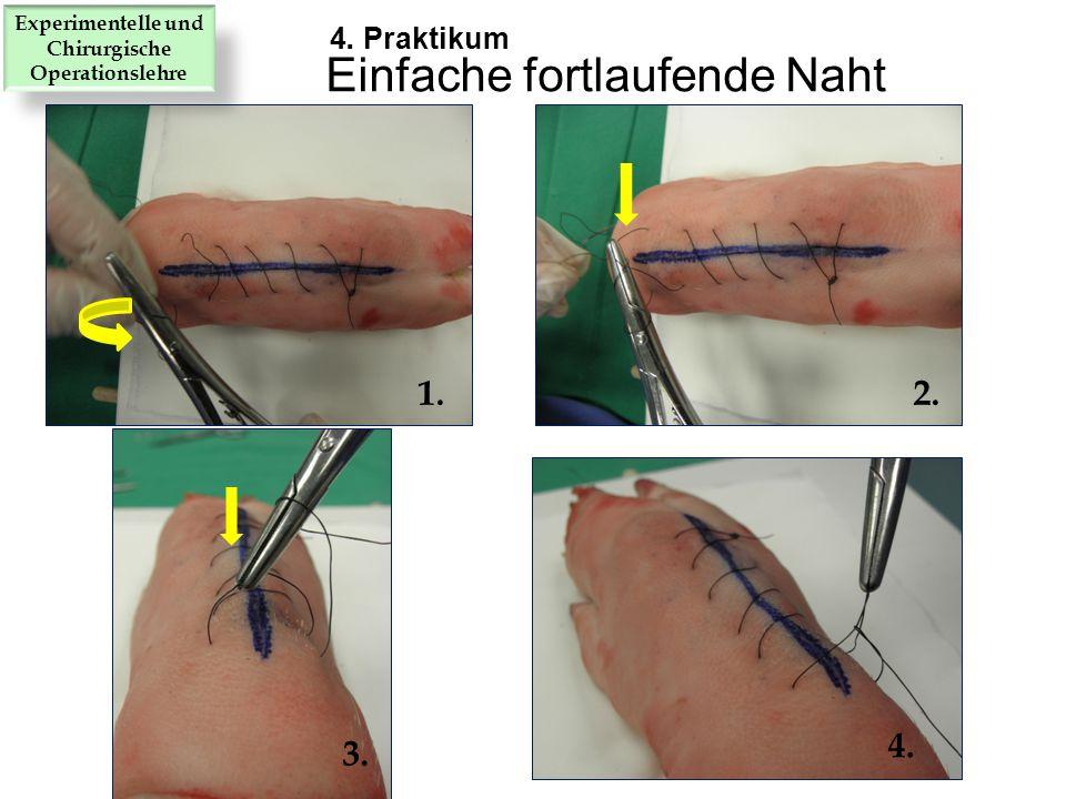 1.2. 3. 4. Einfache fortlaufende Naht 4. Praktikum Experimentelle und Chirurgische Operationslehre