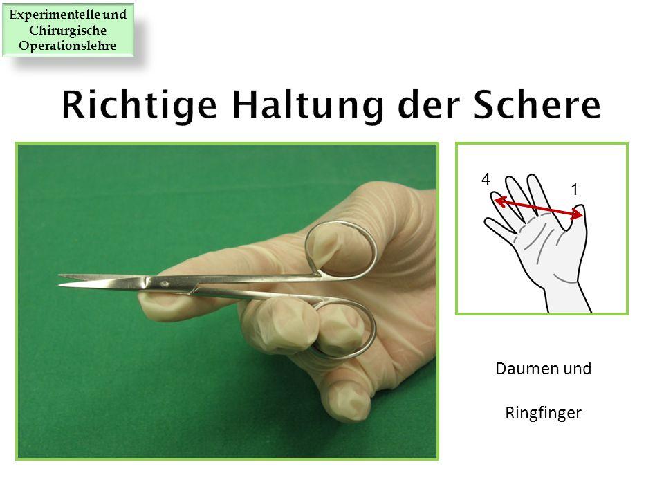 Daumen und Ringfinger 1 4 Experimentelle und Chirurgische Operationslehre