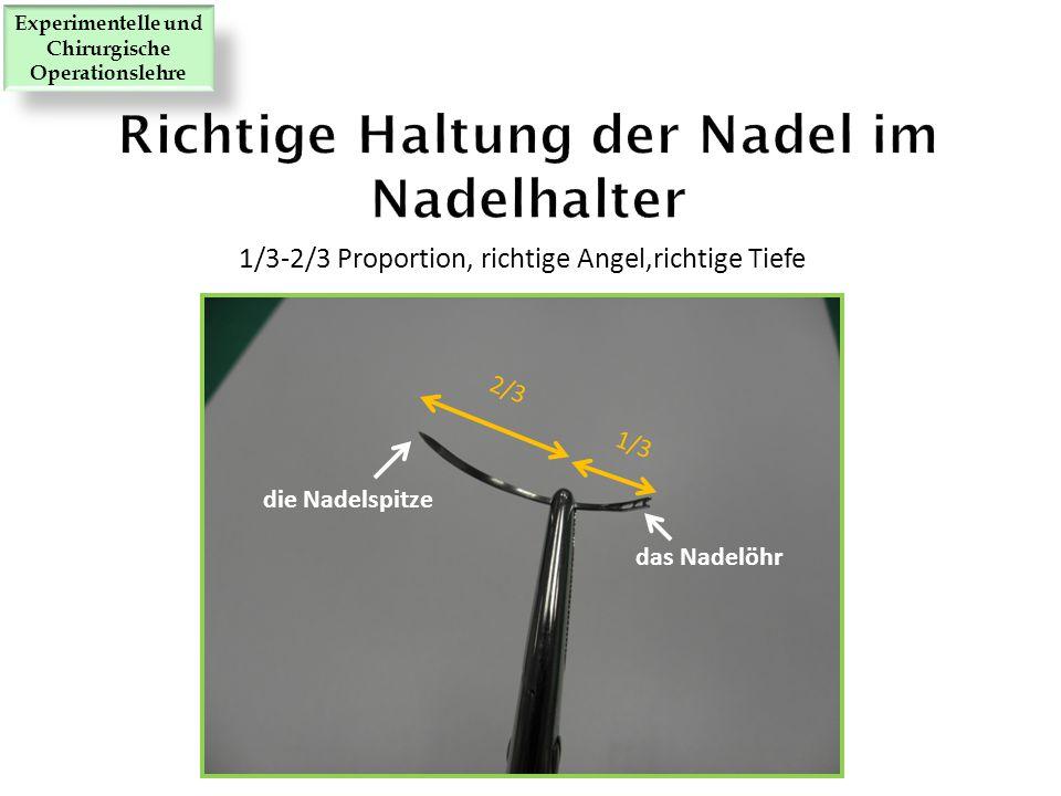 1/3-2/3 Proportion, richtige Angel,richtige Tiefe 1/3 2/3 das Nadelöhr die Nadelspitze Experimentelle und Chirurgische Operationslehre