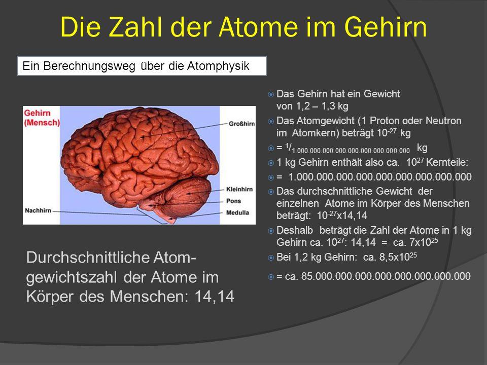 Die Zahl der Atome im Gehirn  Das Gehirn hat ein Gewicht von 1,2 – 1,3 kg  Das Atomgewicht (1 Proton oder Neutron im Atomkern) beträgt 10 -27 kg  =