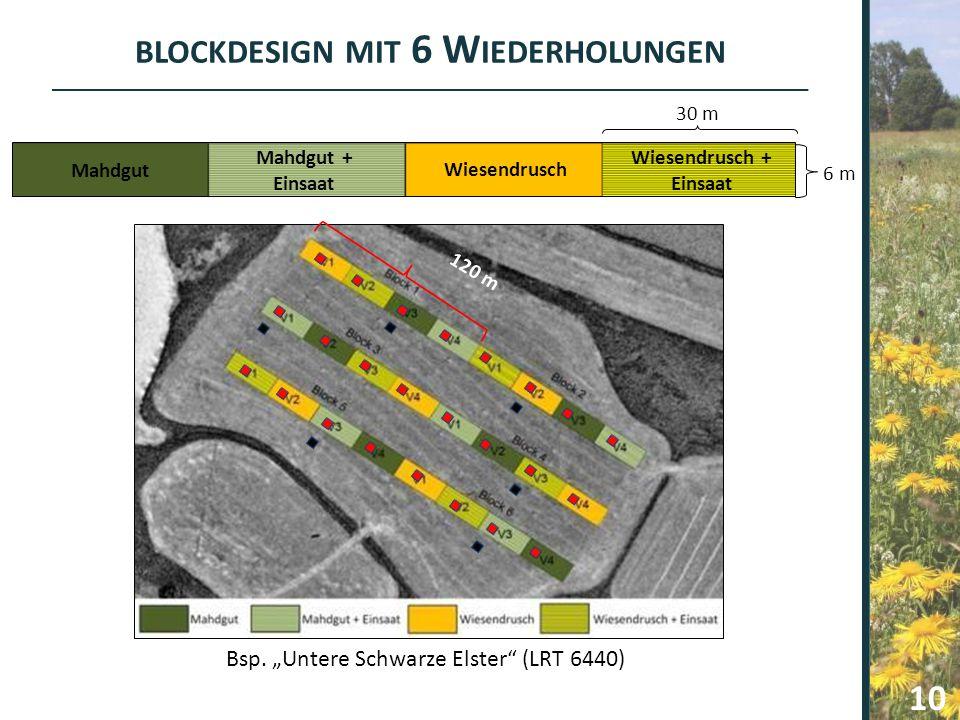 """BLOCKDESIGN MIT 6 W IEDERHOLUNGEN Bsp. """"Untere Schwarze Elster"""" (LRT 6440) 120 m Mahdgut Mahdgut + Einsaat Wiesendrusch Wiesendrusch + Einsaat 6 m 30"""