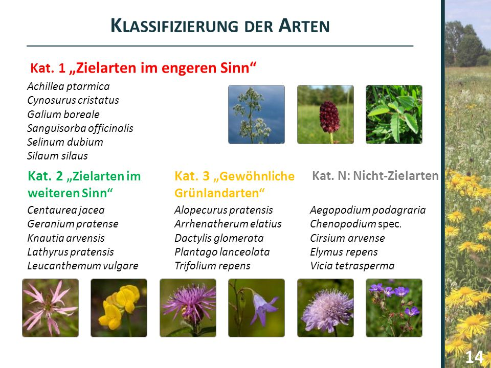 Achillea ptarmica Cynosurus cristatus Galium boreale Sanguisorba officinalis Selinum dubium Silaum silaus Centaurea jacea Geranium pratense Knautia ar