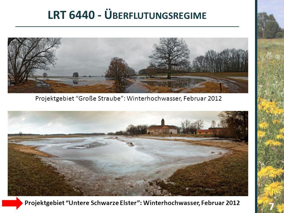 "LRT 6440 - Ü BERFLUTUNGSREGIME 7 Projektgebiet ""Große Straube"": Winterhochwasser, Februar 2012 Projektgebiet ""Untere Schwarze Elster"": Winterhochwasse"