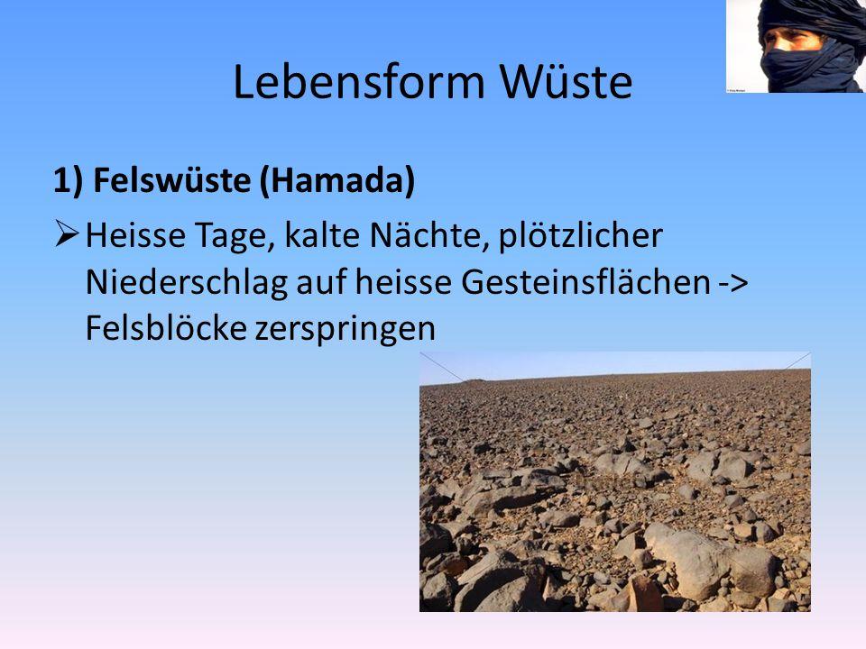 Lebensform Wüste 1) Felswüste (Hamada)  Heisse Tage, kalte Nächte, plötzlicher Niederschlag auf heisse Gesteinsflächen -> Felsblöcke zerspringen