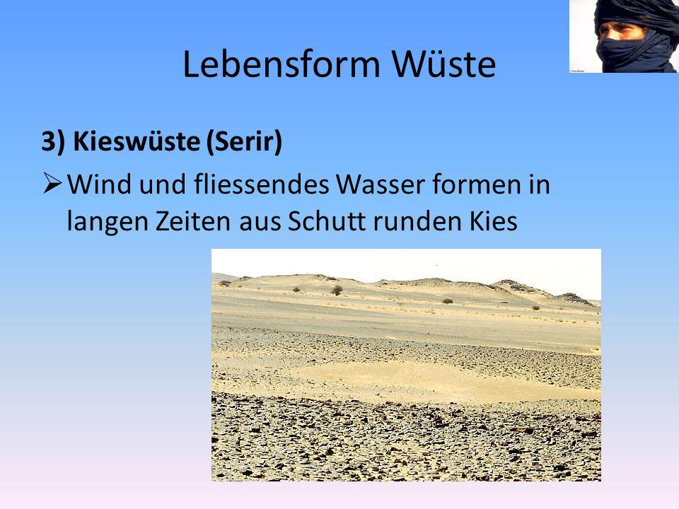 Lebensform Wüste 3) Kieswüste (Serir)  Wind und fliessendes Wasser formen in langen Zeiten aus Schutt runden Kies