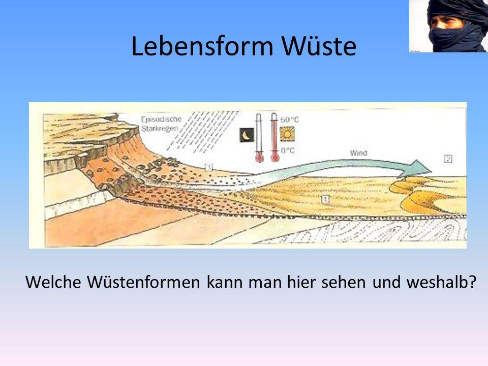Lebensform Wüste Welche Wüstenformen kann man hier sehen und weshalb?