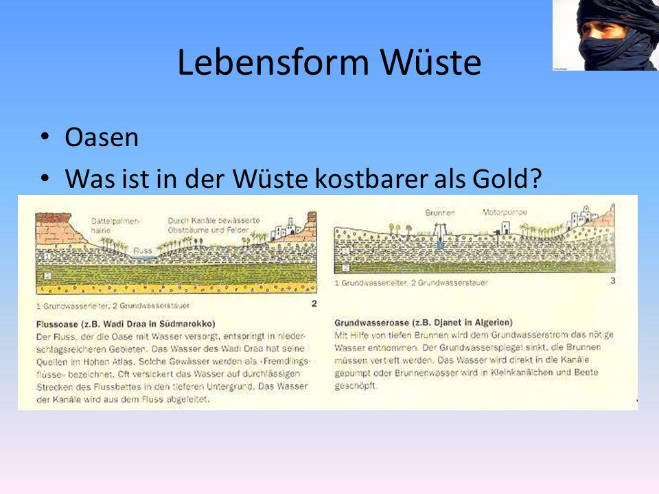Lebensform Wüste Oasen Was ist in der Wüste kostbarer als Gold?