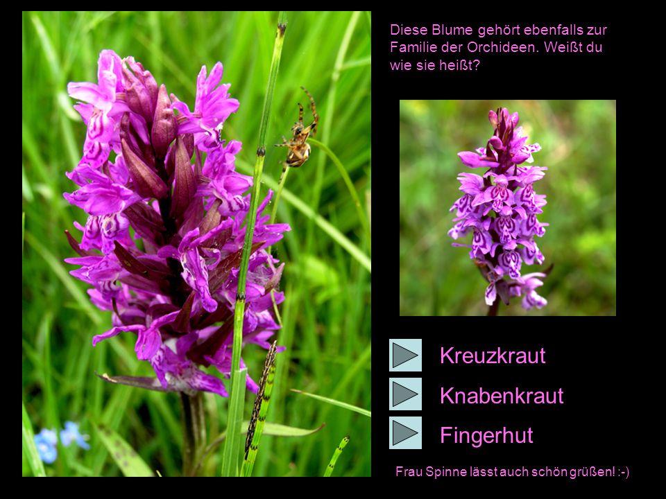 Diese Blume gehört ebenfalls zur Familie der Orchideen.