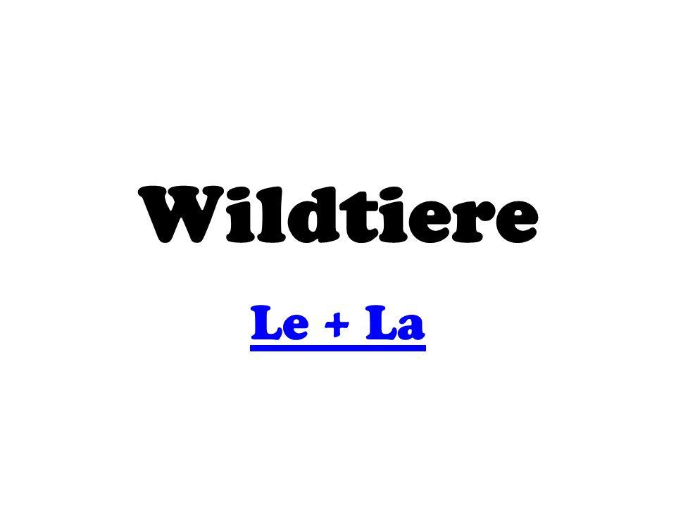 Wildtiere Le + La