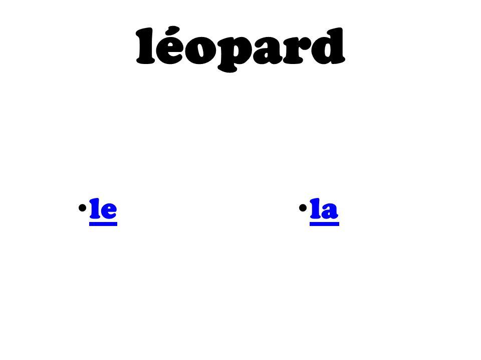 léopard le la