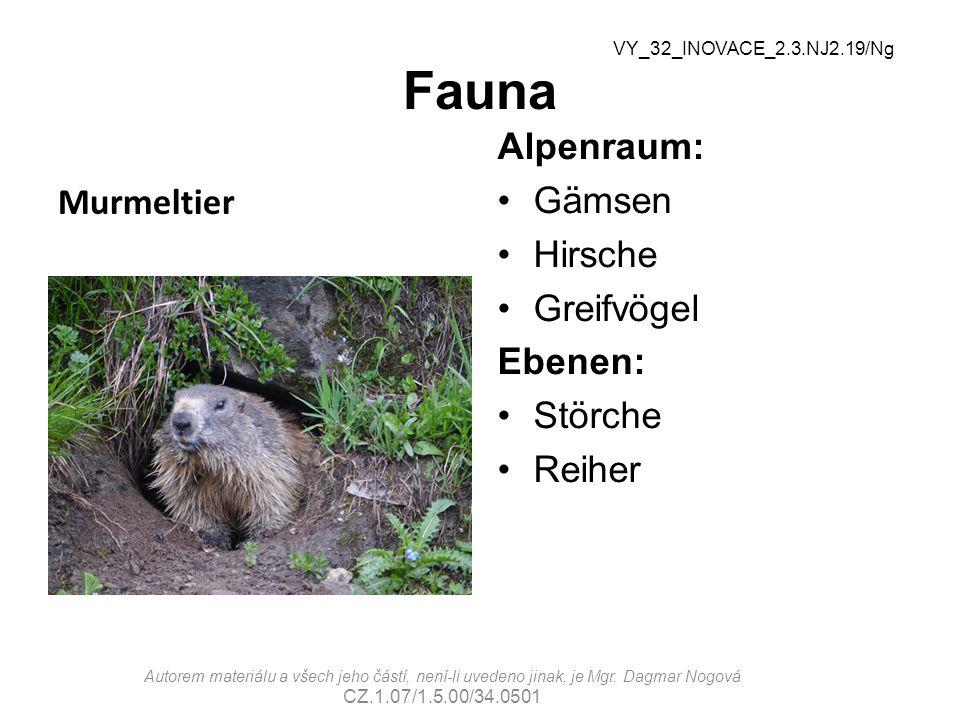 Fauna Murmeltier Alpenraum: Gämsen Hirsche Greifvögel Ebenen: Störche Reiher VY_32_INOVACE_2.3.NJ2.19/Ng Autorem materiálu a všech jeho částí, není-li