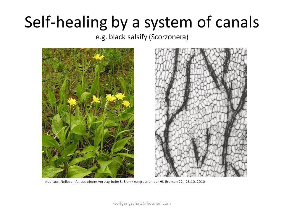 Self-healing by a system of canals e.g. black salsify (Scorzonera) Abb. aus: Nellesen A.; aus einem Vortrag beim 5. Bionikkongress an der HS Bremen 22