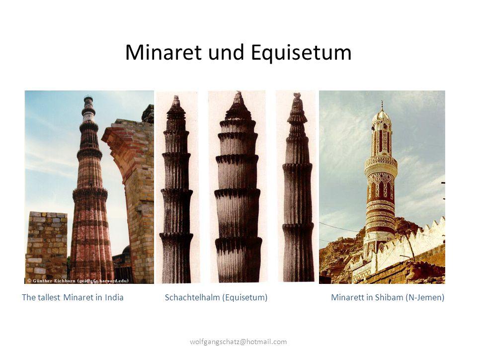 Minaret und Equisetum The tallest Minaret in India Schachtelhalm (Equisetum) Minarett in Shibam (N-Jemen) wolfgangschatz@hotmail.com