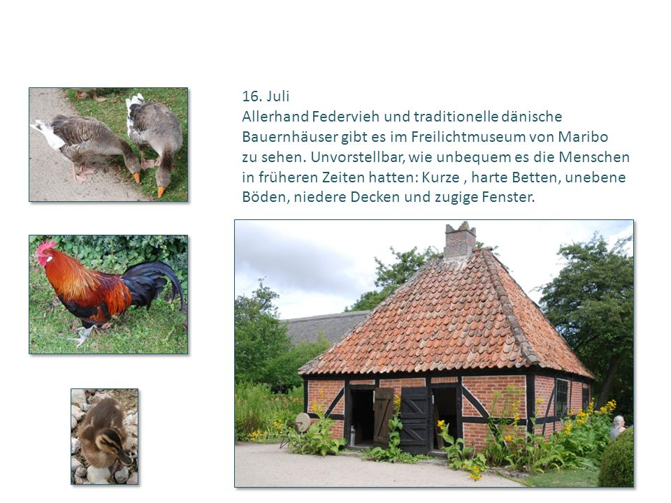 16. Juli Allerhand Federvieh und traditionelle dänische Bauernhäuser gibt es im Freilichtmuseum von Maribo zu sehen. Unvorstellbar, wie unbequem es di