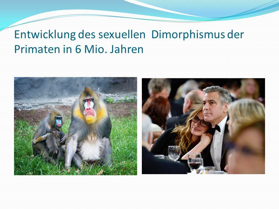 Entwicklung des sexuellen Dimorphismus der Primaten in 6 Mio. Jahren