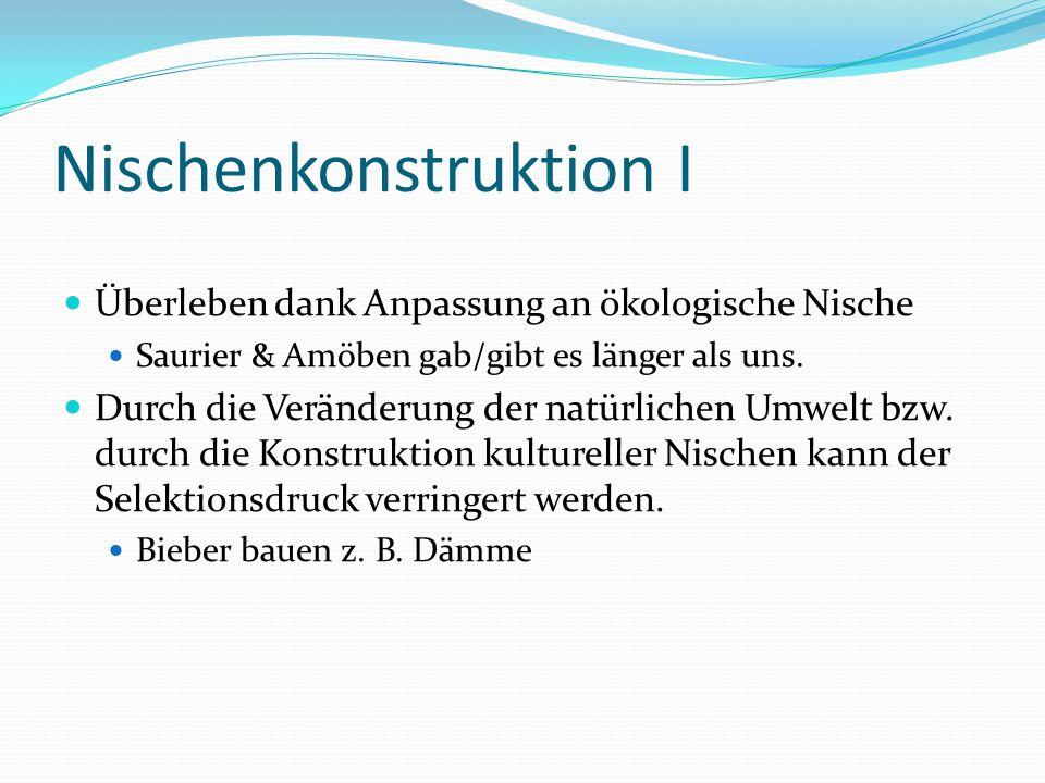 Nischenkonstruktion I Überleben dank Anpassung an ökologische Nische Saurier & Amöben gab/gibt es länger als uns. Durch die Veränderung der natürliche