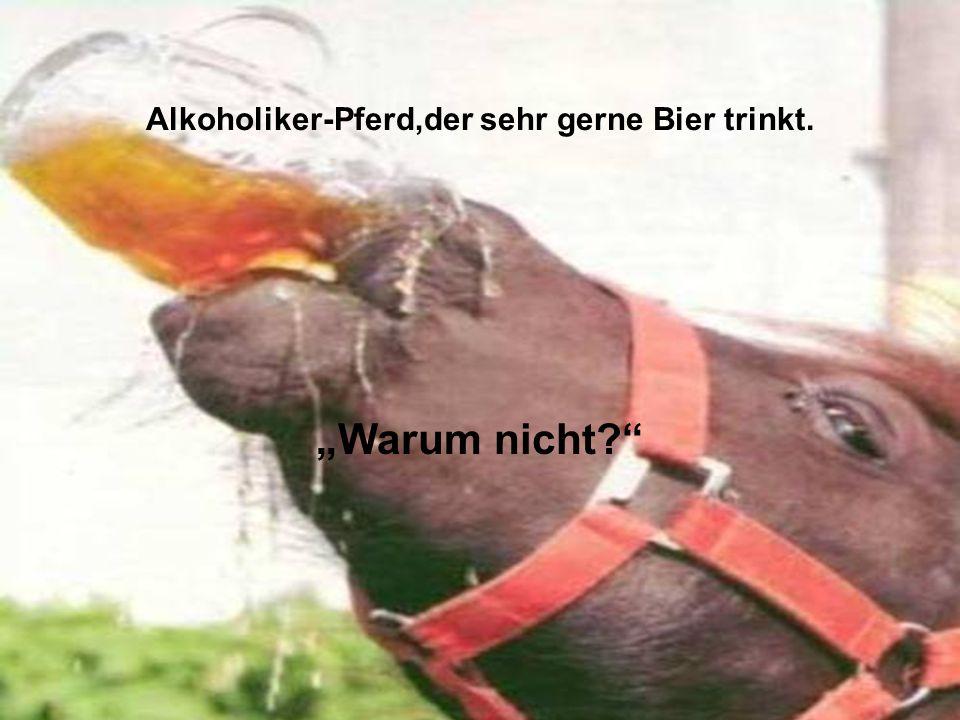 """Alkoholiker-Pferd,der sehr gerne Bier trinkt. """"Warum nicht?"""""""