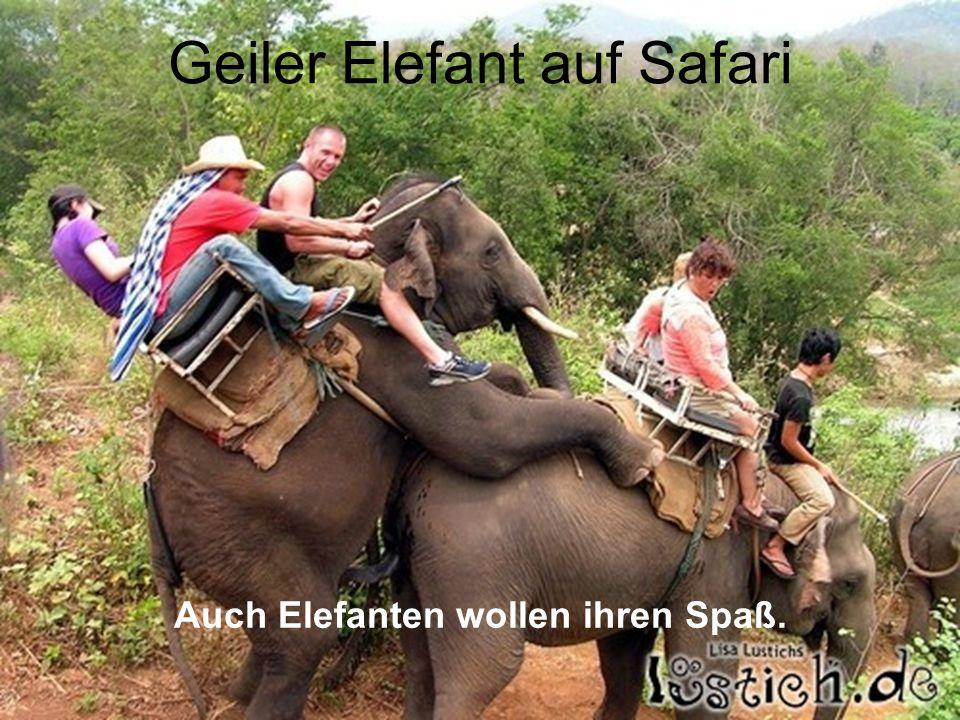 Geiler Elefant auf Safari Auch Elefanten wollen ihren Spaß.