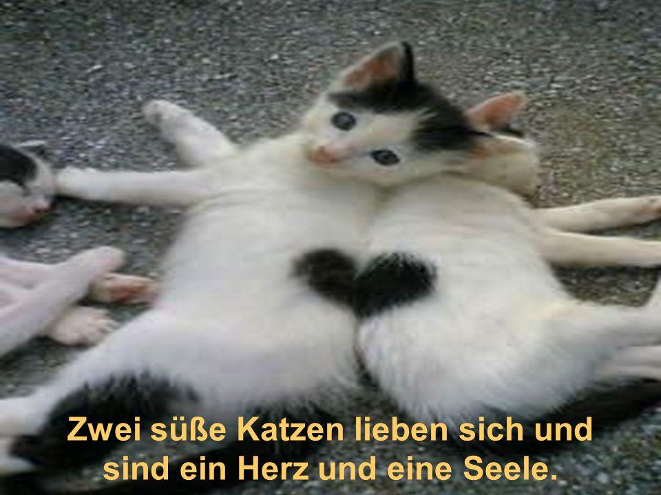 Zwei süße Katzen lieben sich und sind ein Herz und eine Seele.