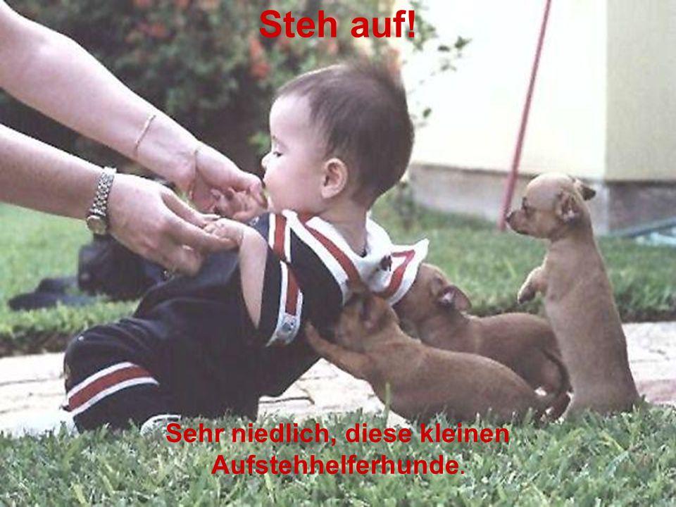 Steh auf! Sehr niedlich, diese kleinen Aufstehhelferhunde.