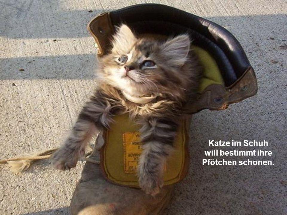 Katze im Schuh will bestimmt ihre Pfötchen schonen.