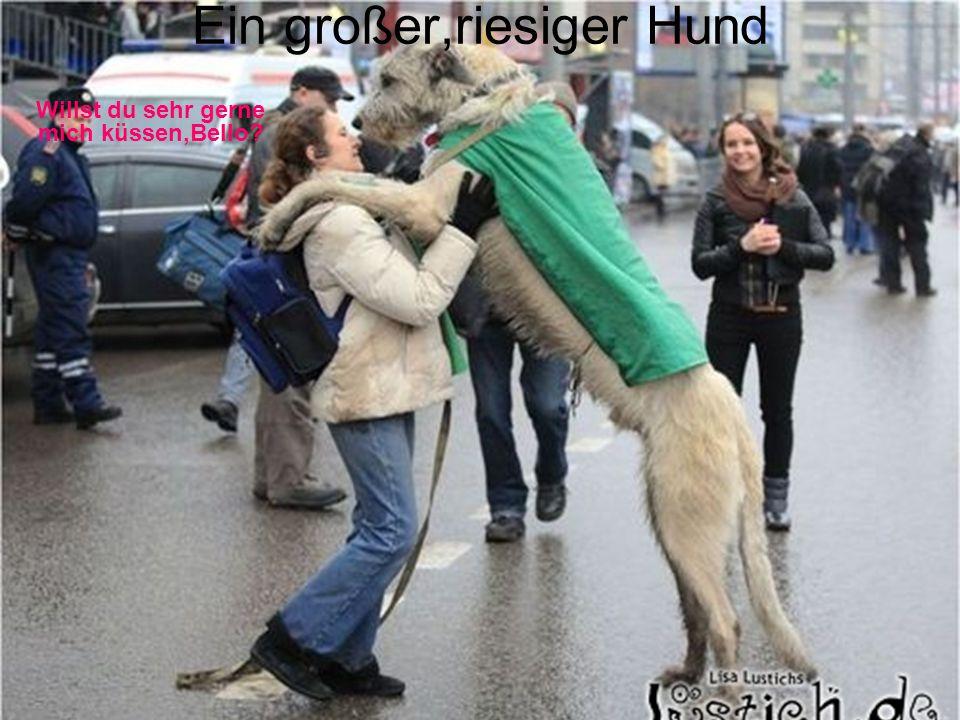 Ein großer,riesiger Hund Willst du sehr gerne mich küssen,Bello?