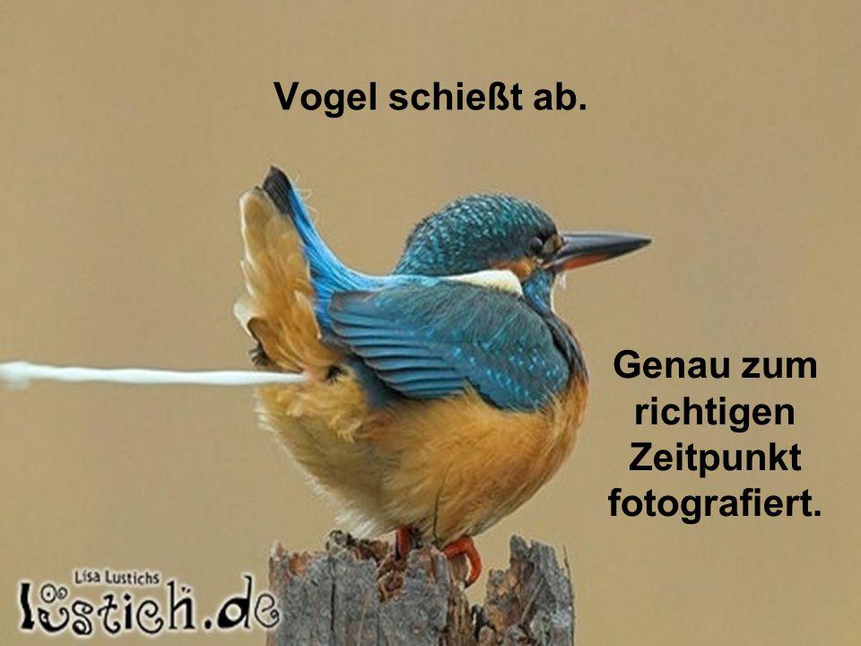 Vogel schießt ab. Genau zum richtigen Zeitpunkt fotografiert.