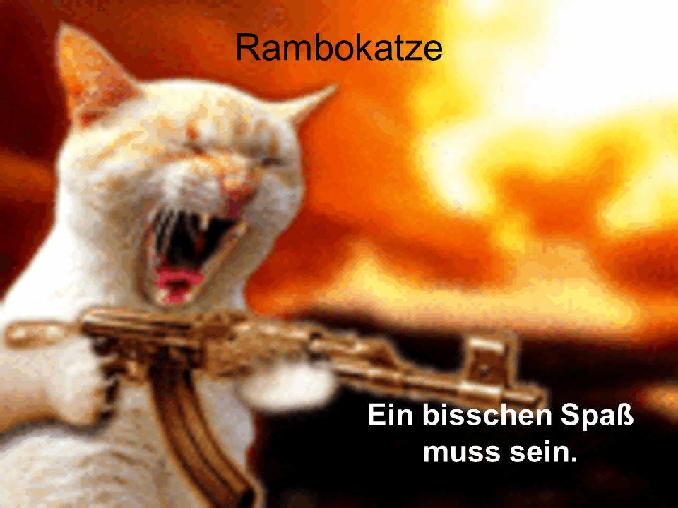 Rambokatze Ein bisschen Spaß muss sein.