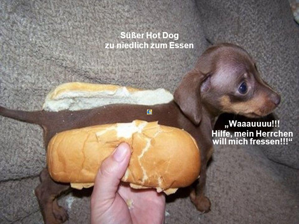 """Süßer Hot Dog zu niedlich zum Essen """"Waaauuuu!!! Hilfe, mein Herrchen will mich fressen!!!"""""""