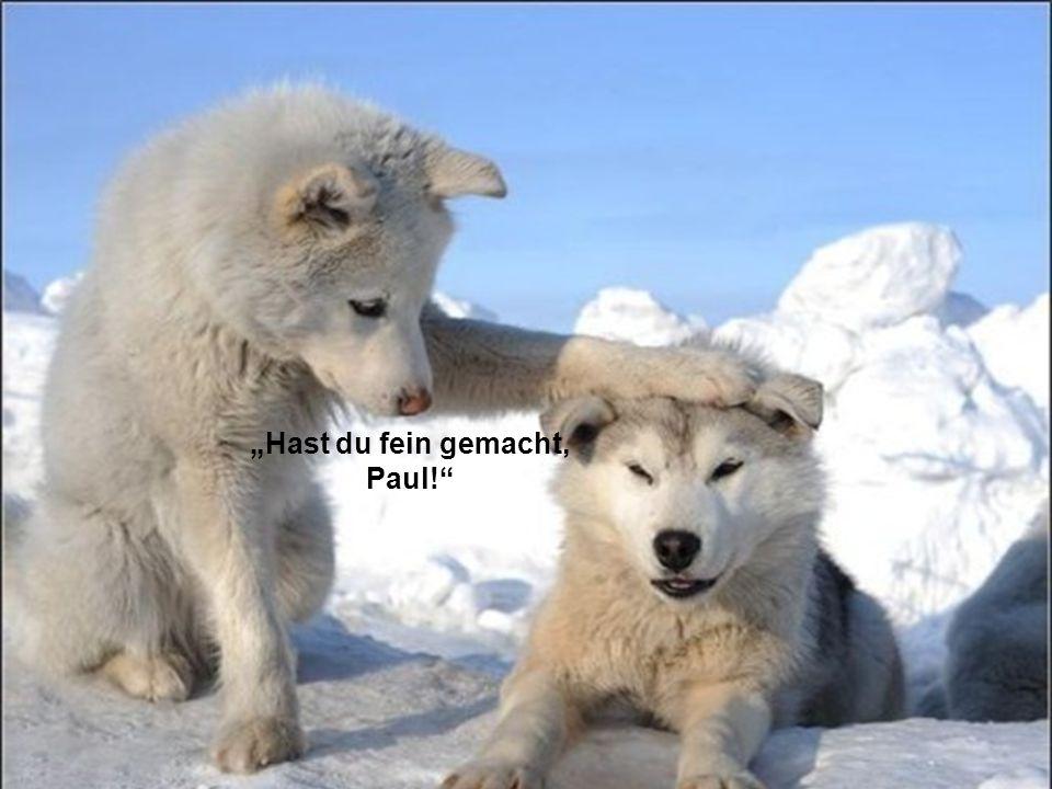 """Hast du fein gemacht, Paul!"""
