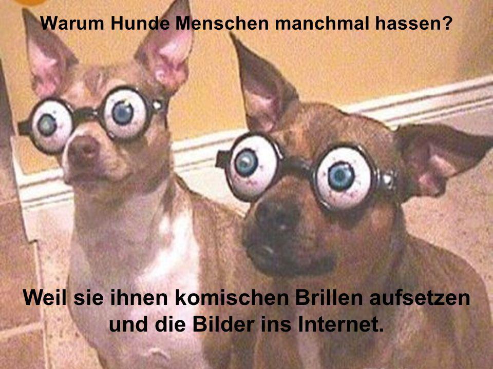 Warum Hunde Menschen manchmal hassen? Weil sie ihnen komischen Brillen aufsetzen und die Bilder ins Internet.