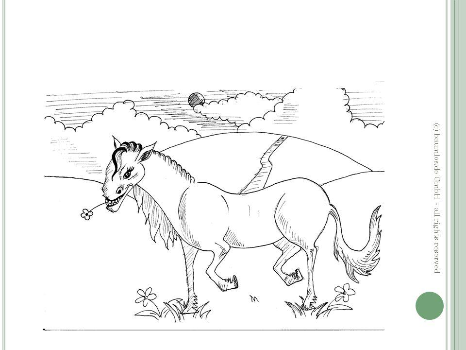 F AZIT DER G ESCHICHTE Vernetztes Arbeiten am Pferd ist wichtig.