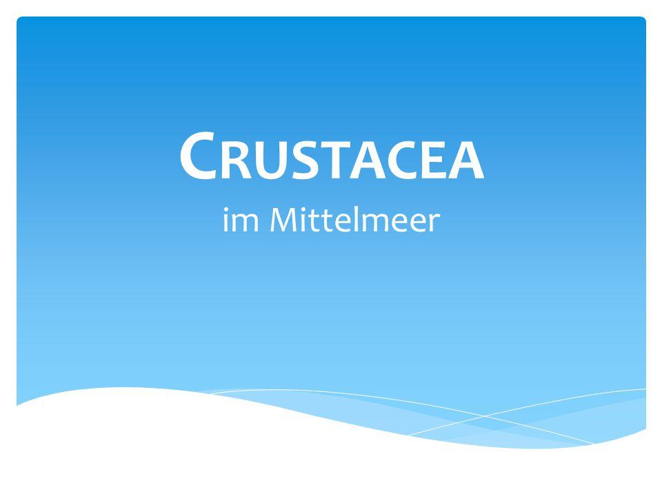 C RUSTACEA im Mittelmeer