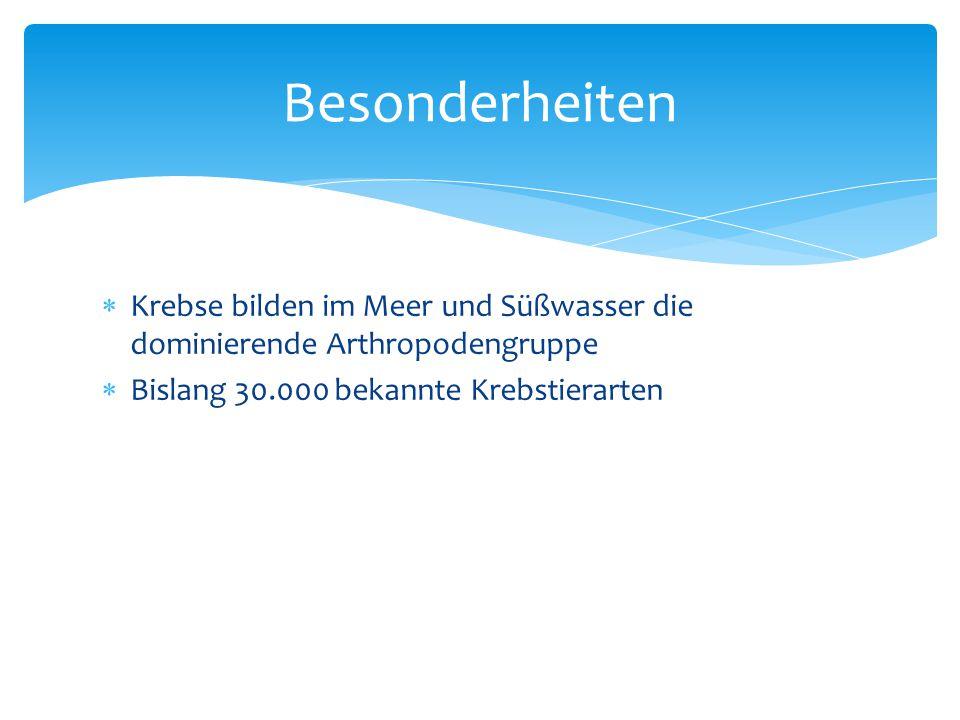  bodenbewohnende, zwittrige Kleinkrebse  19 Rumpfsegmente CEPHALOCARIDA http://www.uni-ulm.de/typo3temp/pics/6a4c28e08d.jpg