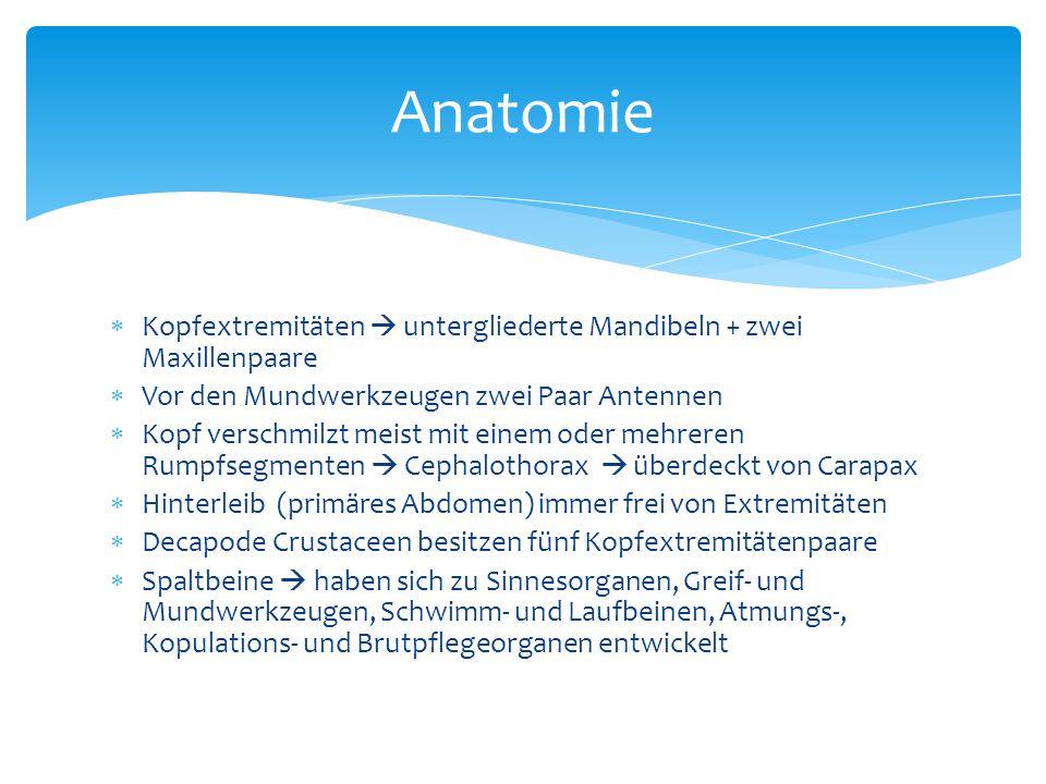 Branchiura (Karpfenläuse)  Kiemenschwänze  abgeflachte Ektoparasiten bei Fischen und Kaulquappen MAXILLOPODA http://www.ucmp.berkeley.edu/arthropoda/ crustacea/images/branchiura3.jpg Mystacocarida  Leben im Sandlückensystem des Meeres  Weniger als 0,5 mm lang  Flexibler, wurmförmiger Körper mit 11 Segmenten http://meiochile.matthewlee.org/wp- content/uploads/2008/08/Derocheilocaris_galvarini_003- bw.jpeg