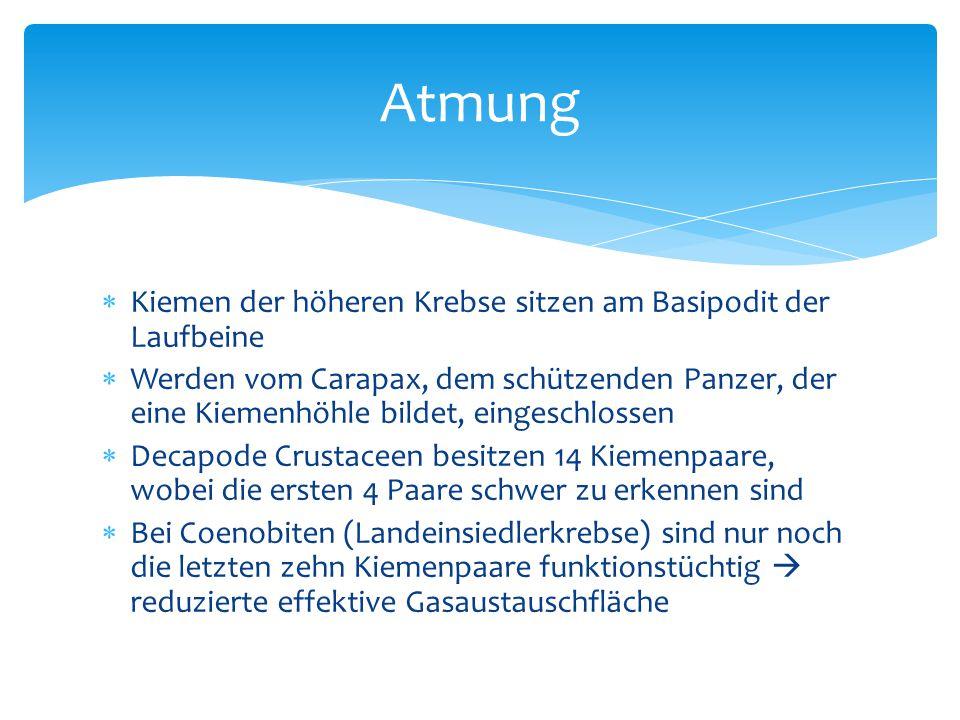 http://www.bekos-anglerforum.de/discus/messages/1694/1885.jpg