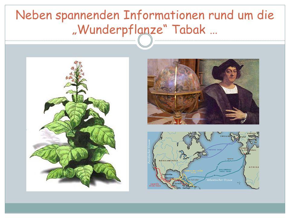 """Neben spannenden Informationen rund um die """"Wunderpflanze"""" Tabak …"""