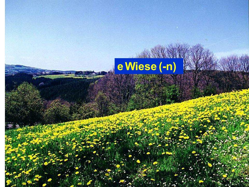 e Wiese (-n)