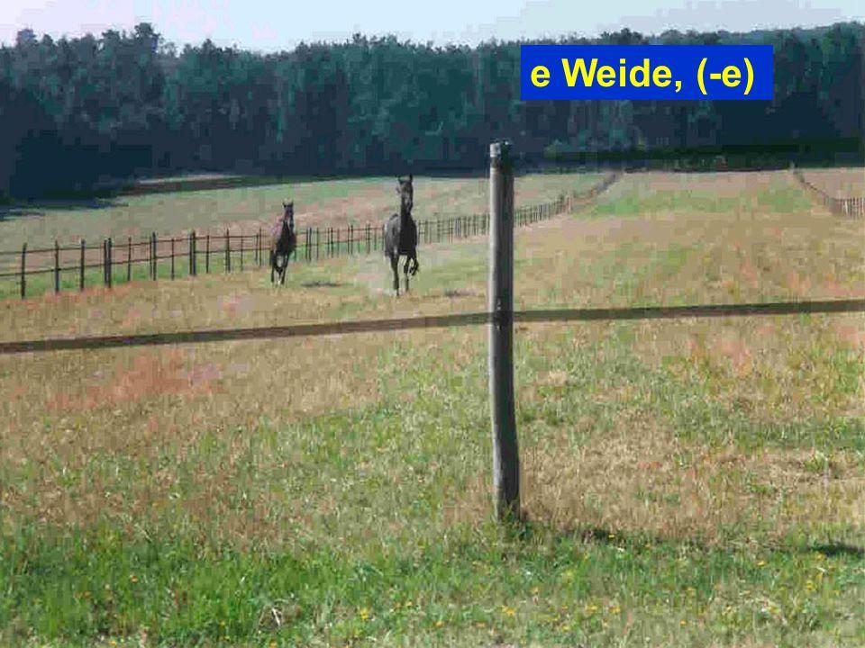 e Weide, (-e)