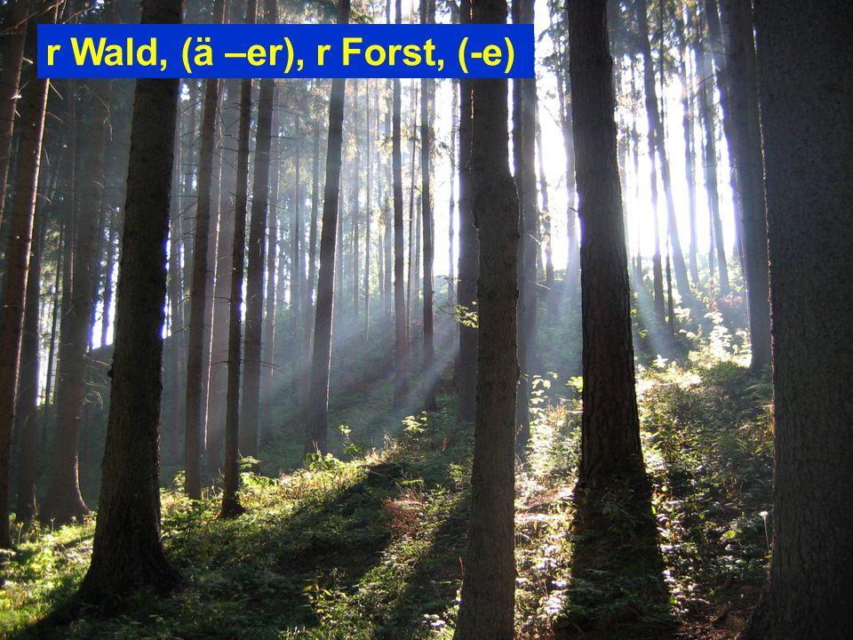 r Wald, (ä –er), r Forst, (-e)