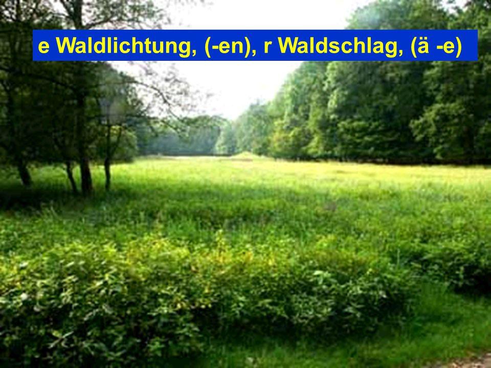 e Waldlichtung, (-en), r Waldschlag, (ä -e)